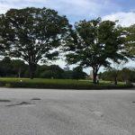 江戸城本丸の芝生