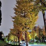 代々木公園付近のイチョウの紅葉(Xiaomi Mi A3 夜景モードで撮影してみた)