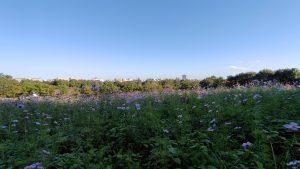 丘からの都市